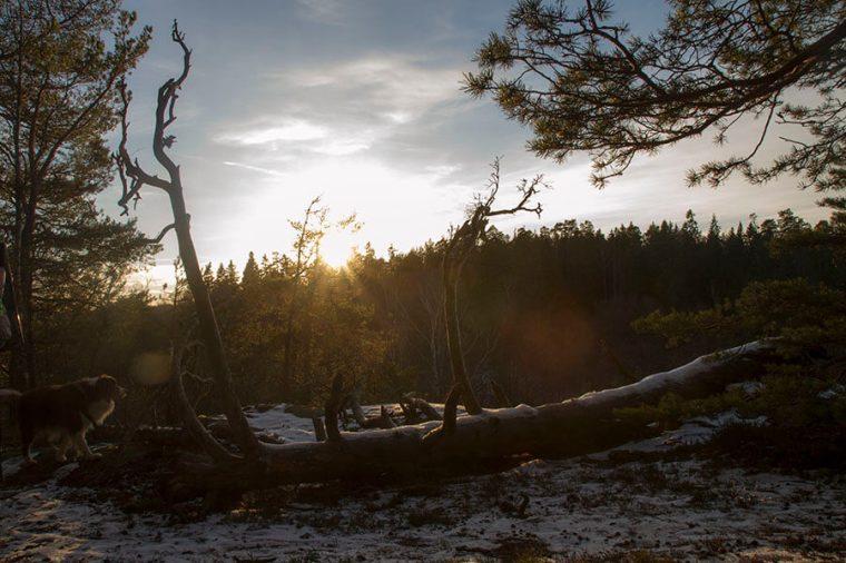 isveçte trekking-gülden notlar (2)